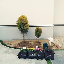 玄関/入り口/花壇/植物/お花/春...などのインテリア実例 - 2021-03-19 23:10:58