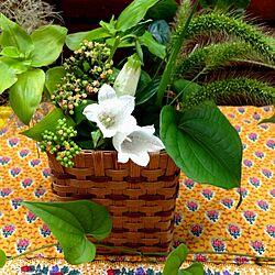 ソレイアード/植物/庭の花/花*/かごのインテリア実例 - 2013-06-28 18:24:11
