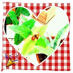 机/植物/ヒペリカムのインテリア実例 - 2014-05-30 10:50:59