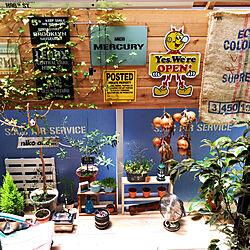 デッキDIY/レディキロワット/観葉植物/ステンシル/ワトコオイル ドリフトウッド...などのインテリア実例 - 2019-07-06 14:00:06