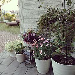 玄関/入り口/ガーデニング/庭/お気に入り/寄せ植え...などのインテリア実例 - 2020-05-15 22:18:05