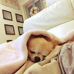 ベッド周り/ガラスブロック/朝の1枚♡/ペパナプリース❁/DIY♡...などのインテリア実例 - 2017-10-19 09:04:54