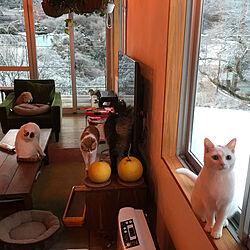 部屋全体/里山/ねこ/LIXIL/LIXILの窓...などのインテリア実例 - 2018-01-30 06:52:05