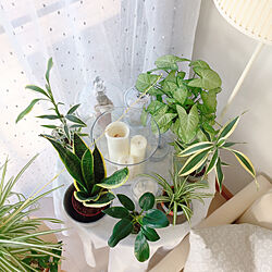 机/ナチュラル/観葉植物/どこで●●しているの/植物に水をあげるところ...などのインテリア実例 - 2018-02-23 08:31:56