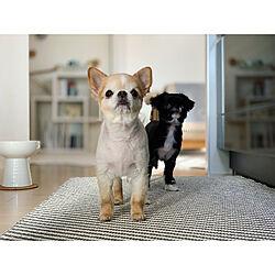 楽天roomに載せてます/ミックス犬/北欧インテリア/北欧/マンションインテリア...などのインテリア実例 - 2021-09-15 18:38:04