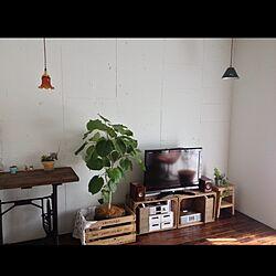 部屋全体/植物/ウンベラータ/アンティーク/木箱...などのインテリア実例 - 2013-03-02 17:03:09
