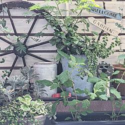 セリア塗料/ダイソー塗料/ガーデン雑貨DIY/ハンドメイド/すのこリメイク...などのインテリア実例 - 2020-06-05 09:13:11