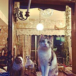 部屋全体/カウンターDIY/羊毛フェルト/猫/輸入壁紙...などのインテリア実例 - 2016-10-22 19:33:14