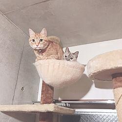 猫スペース/ねこ/ねこと暮らす/猫のための家/猫...などのインテリア実例 - 2020-04-08 23:30:47