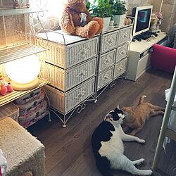 部屋全体/ねこ/ねこが好き/猫/ねこ部...などのインテリア実例 - 2021-05-15 12:38:25