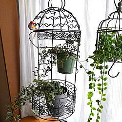 リビング/アンティーク調/ガーデン雑貨/観葉植物/鳥かごのインテリア実例 - 2021-05-04 08:24:10