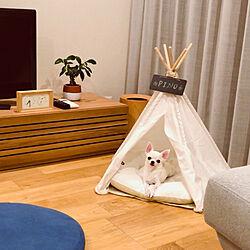 ティピーテント/犬と暮らす/リビングのインテリア実例 - 2019-04-06 23:16:50
