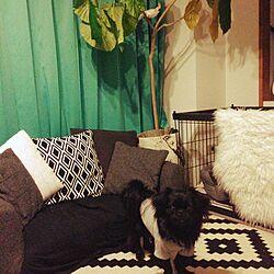 リビング/IKEA/観葉植物/犬のいる暮らし/植物...などのインテリア実例 - 2015-02-26 22:50:23