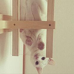 ガリガリサークル/猫用トイレ/蓄熱暖房機の上/猫の兄妹/猫ちゃんずと暮らす...などのインテリア実例 - 2020-02-16 22:33:16