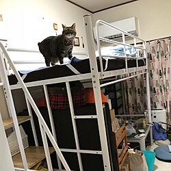 ベッド周り/ロフトベッド/ねこと暮らす。/ねこが好き/ワンルーム 一人暮らし...などのインテリア実例 - 2018-09-06 22:55:24