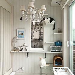 壁/天井/いつもいいねやコメントありがとう♡/猫と暮らす。/猫のいる日常/海外インテリアに憧れて♡...などのインテリア実例 - 2018-12-16 17:51:47