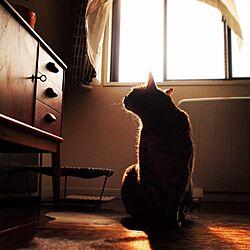 部屋全体/猫とインテリア/北欧ヴィンテージ家具/北欧インテリア/北欧家具...などのインテリア実例 - 2016-04-01 02:22:53