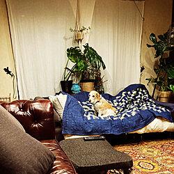 わんこと暮らす家/ソファ/二人暮らし/模様替え/平屋...などのインテリア実例 - 2021-03-20 23:42:17