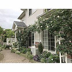 玄関/入り口/つるバラ/アイスバーグ/ピエールドゥロンサール/薔薇が好き...などのインテリア実例 - 2017-05-10 20:17:45