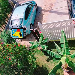 ブラシの木/芝刈り大変/banana!/玄関/入り口/庭のインテリア実例 - 2017-09-21 11:08:07