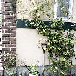 玄関/入り口/木香薔薇/外壁/建売住宅/めざせエレガントジャングルのインテリア実例 - 2014-05-03 14:57:43