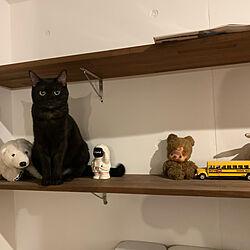 棚/ぬいぐるみの中に混ざる猫/ねこあるある/DIY/ねこのいる風景...などのインテリア実例 - 2021-09-20 08:35:53