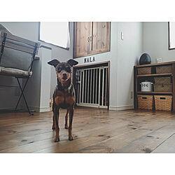 部屋全体/犬の部屋/わんこスペース/わんこの部屋/犬のいる暮らし...などのインテリア実例 - 2018-04-01 15:39:52