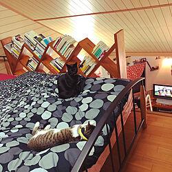 遊びたい猫/疲れ切って寝る猫/ロフトベッドで寝る猫/黒猫ミースケ/ねこのいる風景...などのインテリア実例 - 2021-04-11 21:49:43