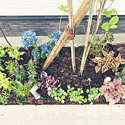 植木/庭/シンボルツリー/ヤマボウシ/玄関/入り口のインテリア実例 - 2020-06-16 08:08:35