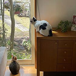 庭を楽しむネコ/庭を眺める家/ラグ 姉 キジトラ/カーテンを開けておく/広く見せる...などのインテリア実例 - 2021-03-23 11:38:21
