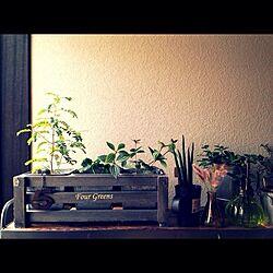 棚/グリーン/植物/植物棚/アイアンシェルフのインテリア実例 - 2013-09-30 15:05:35