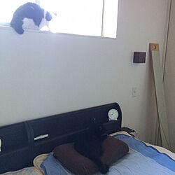ベッド周り/6畳寝室/シンプルインテリア/猫と暮らす/猫...などのインテリア実例 - 2017-09-02 08:49:34