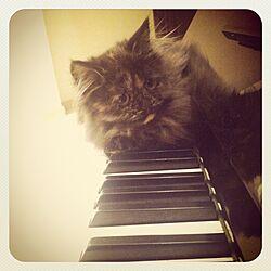 机/My Cat Levyのインテリア実例 - 2012-10-25 09:47:44