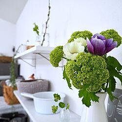花のある暮らし/暮らしを楽しむ/植物のある暮らし/いいね、フォロー本当に感謝デス☺︎/頑張りすぎない...などのインテリア実例 - 2019-03-16 15:14:38