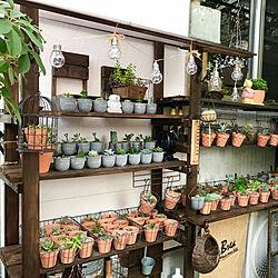 棚/多肉棚DIY/多肉棚/大人買い/バラの庭...などのインテリア実例 - 2018-07-24 07:05:46