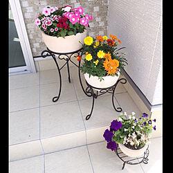 玄関/入り口/植木鉢/新築/新築マイホーム/お花のある生活のインテリア実例 - 2018-06-02 19:58:45