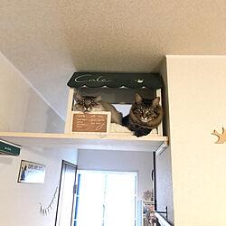 ベッド周り/ねこが好き/ねこと暮らす/猫多頭飼い/キャットハウスDIY...などのインテリア実例 - 2019-01-20 20:08:39