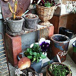 玄関/入り口/ジャンクガーデン目指して/サビ缶/サボテン/我が家には珍しくお花のインテリア実例 - 2014-03-25 14:16:19