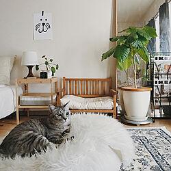 猫ベッド/DIY/ペットと暮らすインテリア/IKEA/ひとり暮らし...などのインテリア実例 - 2019-04-22 18:07:49