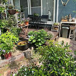 オープンラックDIY/睡蓮鉢/雑木の庭/ダイソー雑貨/オープンラック...などのインテリア実例 - 2021-05-11 11:59:27