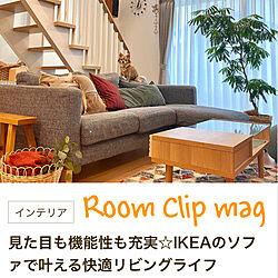 秋インテリア/北欧ナチュラル/IKEAのソファー/mag掲載ありがとうございます♡/観葉植物...などのインテリア実例 - 2021-05-08 19:02:27