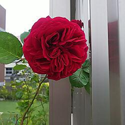 ベッド周り/名古屋/5人の子ママ/7人家族/薔薇が好き...などのインテリア実例 - 2021-05-11 08:40:20