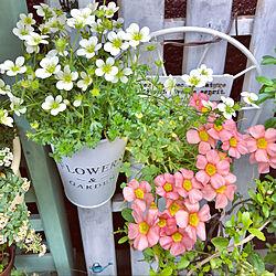みなさんの優しさに感謝❤️/お花に癒されるᙏ̤̫͚ᙏ̤̫͚/花のある暮らし/お花大好き♡/いいねありがとうございます❤️...などのインテリア実例 - 2020-04-29 07:23:45