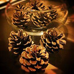 机/まつぼっくり/材料/クリスマス/何か作るぞ!...などのインテリア実例 - 2013-11-15 20:44:44