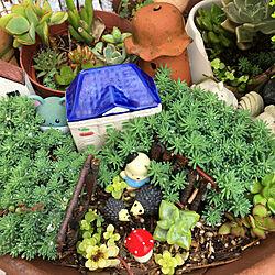 サンリオ/ポケモン/多肉植物/植木鉢/いつもありがとうございます♪感謝☆...などのインテリア実例 - 2020-06-25 10:27:21