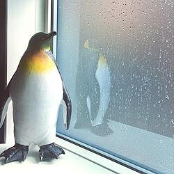 ペンギン/フロストガラス/棚のインテリア実例 - 2020-06-11 22:06:10