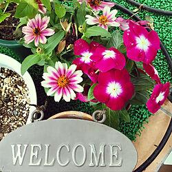 おはようございます(^ー^*)/玄関の前の花たち/いつも優しさをありがとう♡/見て頂き感謝です♪/花のある暮らし...などのインテリア実例 - 2019-09-19 07:09:34