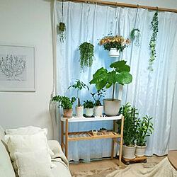 グリーンのある暮らし/natural/植物が好き/観葉植物/NO GREEN NO LIFE...などのインテリア実例 - 2019-02-05 17:03:16