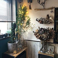 壁/天井/クリスマス/ハンドメイド/植物のある暮らし/セリア...などのインテリア実例 - 2017-12-23 19:38:13