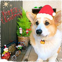 クリスマス/セリア/ニトリ/まつぼっくり/ダイソー...などのインテリア実例 - 2019-12-25 09:43:31